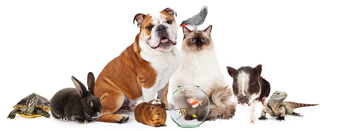 Haustierversorgung